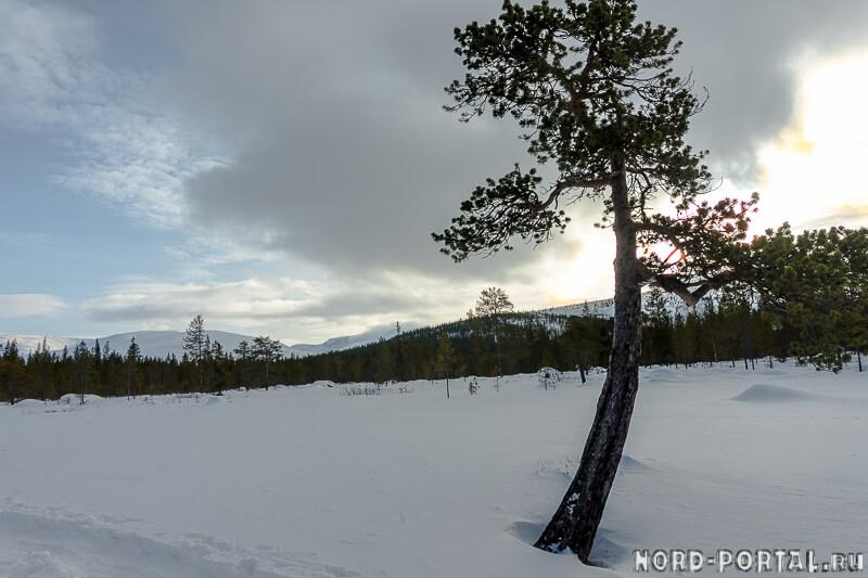 Хибинский снег